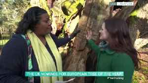 Alison Hammond Interviews A Tree On This Morning