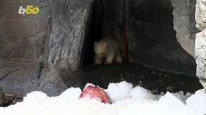 See This Polar Bear Cub Have Its First Adventure Outside [Video]