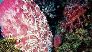 Bizarre alien worm-like creatures infest gigantic barrel sponge [Video]