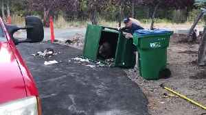 Heroic firefighter releases bear cubs trapped inside a dumpster [Video]