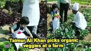 Taimur Ali Khan picks organic veggies at a farm [Video]