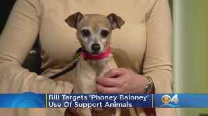 Florida Bill Targets 'Phoney Baloney' Use Of Support Animals [Video]