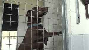 Meet Britain's 'loneliest dog' [Video]