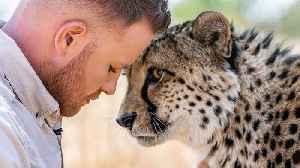 Lion King' Tackles 4 Wild Cheetahs [Video]