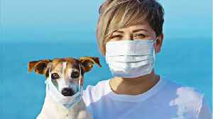 Dog In Hong Kong Possible First Known Case Of Human To Pet Coronavirus [Video]