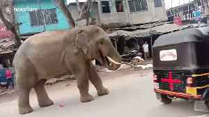 Wild elephant raids town market for bananas in northeast India [Video]