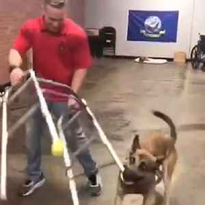 This dog is hilariously failing at becoming a service dog, but we love him anyway [Video]