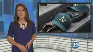 Oakland A's 2020 Preview [Video]