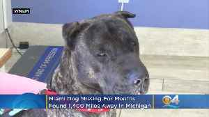 Miami Dog Missing For Months Found 1,400 Miles Away In Michigan [Video]