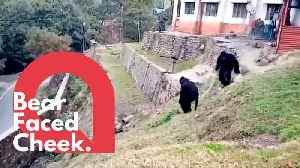Police dress as bears to scare off angry monkeys [Video]
