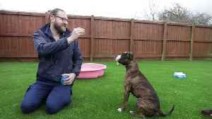 Appeal launched to find home for three-legged dog [Video]