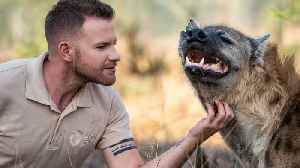 How Hyenas Are Trained For Movies   BIG CAT LIFE [Video]