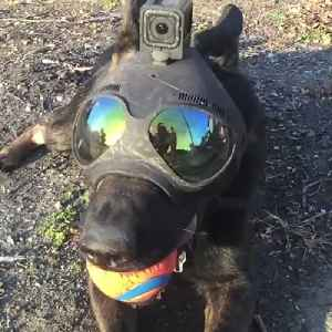 Helmet is designed to be worn by police and military dogs [Video]