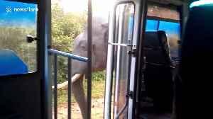 Elephant intercepts tourist bus to raid it for food in Sri Lanka [Video]