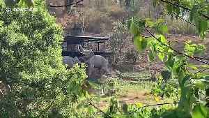 Elephant camps deserted in Thailand raising fears the animals could starve [Video]