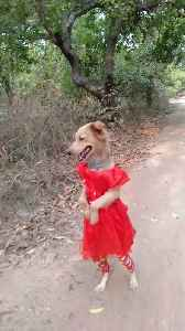 Pup in a Pretty Red Dress [Video]