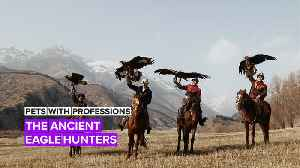Pets with Professions: Wild Eagles are hunters in the Kyrgyz mountains [Video]