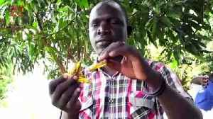 Swarms of Locusts Threaten Crops for Africa's South Sudan, with Half Its Population Already Facing Food Insecurity [Video]