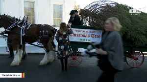 Melania Trump Participates In White House Christmas Tree Delivery [Video]