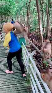 Monkey Back Kicks Woman Standing Close to him [Video]