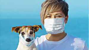 How To Care For Your Pet During The Coronavirus Outbreak [Video]