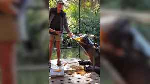 Thirsty hippo enjoys drinking tea from plastic bottle [Video]