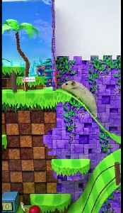 Hamster completes 'Sonic the Hedgehog' inspired maze with ease [Video]