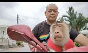 Guy Rides Scooter Around Town With Two Dressed Monkeys Sitting in Front and Back [Video]