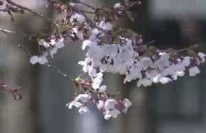 Traditional Japanese lantern shop struggles amid virus [Video]