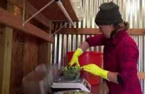 Farm-to-door deliveries increase amid coronavirus [Video]