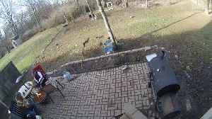 Rambunctious Doggos Knock Over Backyard Barbecue [Video]