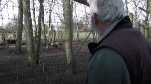 Life in lockdown at award-winning Yorkshire Wildlife Park [Video]