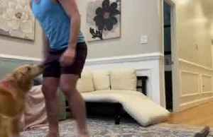 'Dog squat challenge': Man does squats holding Golden Retriever instead of gym weights [Video]