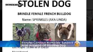 Rancho Cordova Homicide Suspect Also Accused Of Stealing Hollister Woman's French Bulldog [Video]