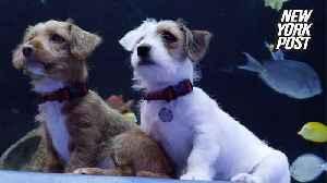 Georgia Aquarium's puppies are adorable and adoptable [Video]