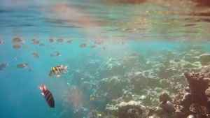 These Animals Clean Viruses From the Ocean [Video]