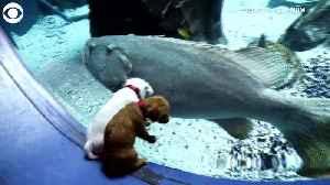 WEB EXTRA: Puppies Go On Field Trip to Georgia Aquarium [Video]