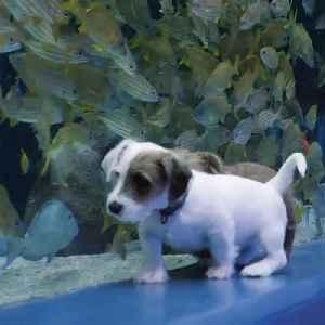 Foster puppies roam free in empty Georgia Aquarium [Video]