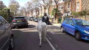 Ponies make house calls to families in isolation in London [Video]