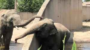 Elephant uses trunk to make contact with buddy on other side of wall [Video]