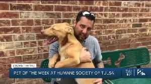Pet of the Week: Finn [Video]