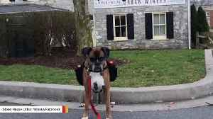 This Winery's Dog Is Making Curbside Deliveries During Coronavirus Outbreak [Video]