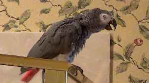 Hospitable parrot offers an interesting lunch invitation [Video]