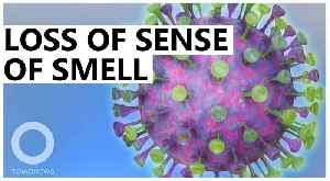 COVID-19 new symptoms: loss of sense of smell and taste [Video]