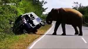 Panic as wild elephant raids vehicle in search of food in Sri Lanka [Video]