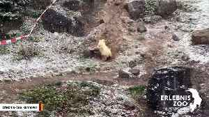 Polar Bear Cub Goes Nuts After Seeing Snow For First Time [Video]