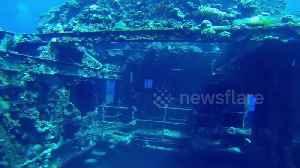 Scuba divers in Egypt swim through eerie shipwreck in Red Sea [Video]
