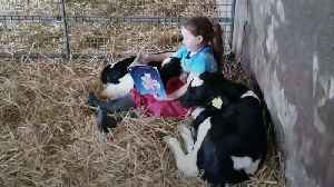 Ireland lockdown: Young girl reads story to calves [Video]