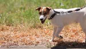 Walking Dogs Banned in Serbia Due to COVID-19 [Video]
