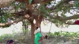 Nowhere to Go But Up: Some Indians Decide to Isolate From Coronavirus in Trees [Video]